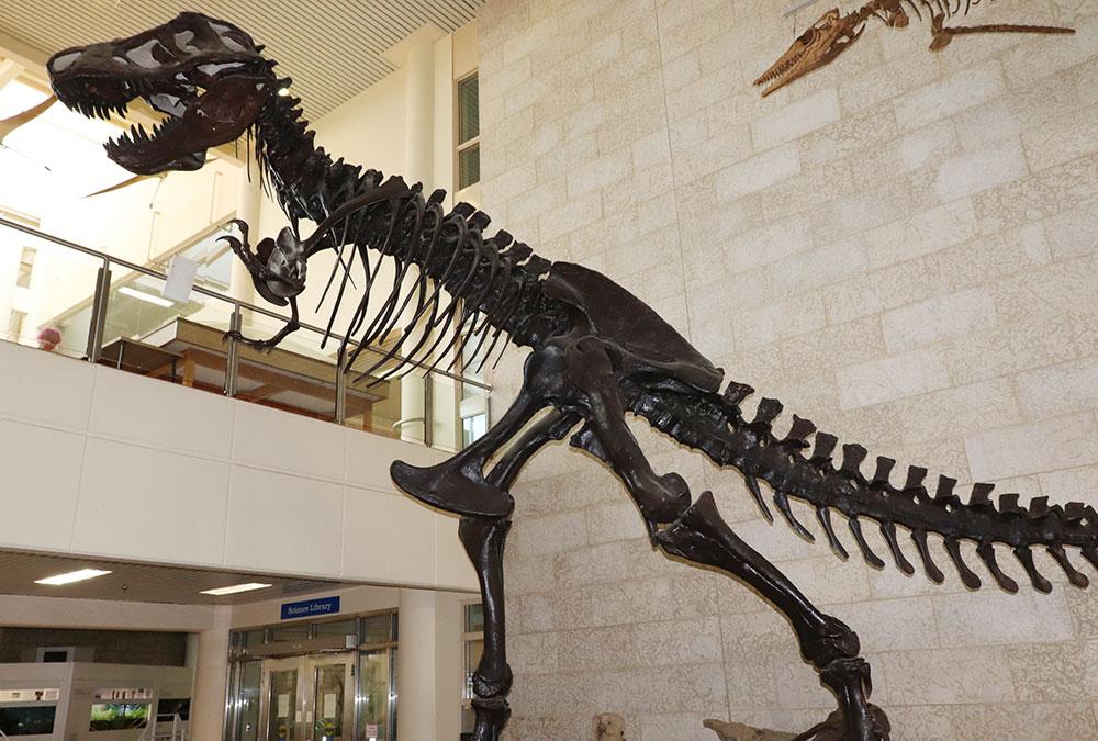 T-Rex fossils